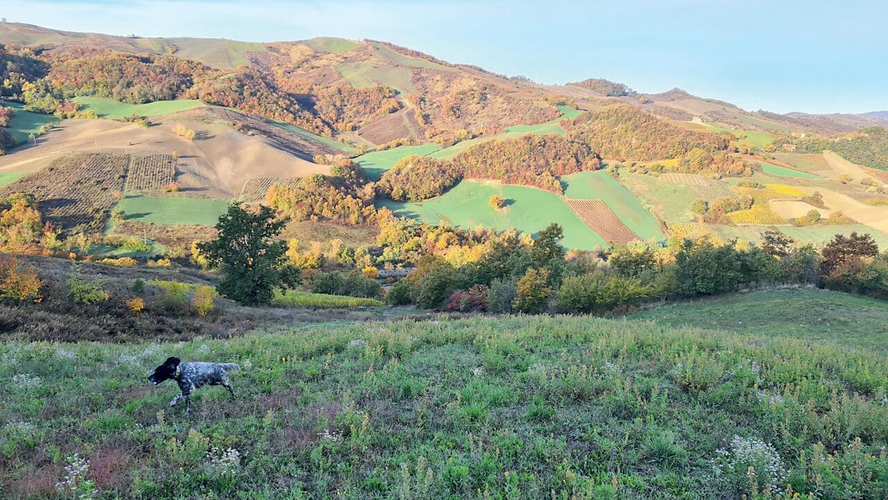 Tipico paesaggio di caccia in Lombardia.