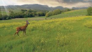Fauna in Toscana