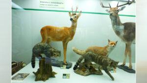 Animali imbalsamati