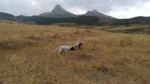 cane su terreno